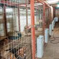 Χώρος φιλοξενίας των λαγόσκυλων. (φωτογραφία: Γ.Σακελλαρίου)