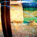 Λαγός στο κλουβί του. (φωτογραφία: Β.Παπαγεωργίου)