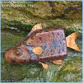 Die Fische der Altmühl, Objekt Shell-Fisch 2Tx. Plastikflasche für Motoröl in Leder eingenäht.