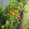 extérieur fleuri, La Maison du Hameau, gite en Baie de Somme