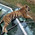 le safari parc de Peaugres
