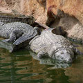la ferme aux crocodiles de Pierrelattes