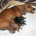 Мать - защитница