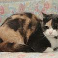 Наша кошка Кассандра
