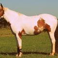1960 er Stil - Pferd, Western, bearbeitet