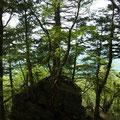 巨石の上に数本の樹木が根をおろして成長している