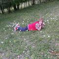 Orchideenblüte - 19.05.2012