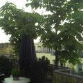 Auf der Terrasse im Sommer