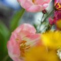 お家の玄関にも春がやってきました。ピンクのチューリップかわいい