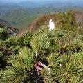 1875mに無事登頂!ピンクリボンがありました。360度崖です。