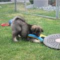 Conner mit Spielzeug am 17.06.2014
