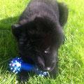 Billie mit Spielzeug am 24.5.2012