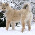 Amilou im Schnee am 22.11.2010