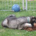 Cedric mit Bär am 09.06.2014