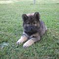 Ausflug auf den Hundeplatz am 19.06.2014