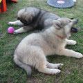 Carmina und Cedric am 26.06.2014