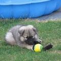 Mit Ball am 13.06.2014