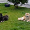 Dina und Amy im Garten