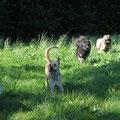 Die Hundemeute