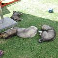 Alle sind müde am 16.06.2014