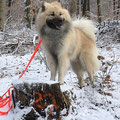 Champ geniesst den Schnee am 17.01.2018