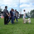 Akita und Dani bei der ZTP in Gerlingen am 17.06.2012