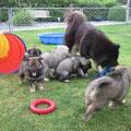 Alle spielen mit Oma am 07.06.2014