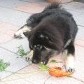 Karotten sind gesund - 22.9.2012