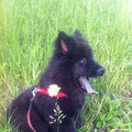 Billie in Ihrem neuen Zuhause am 24.5.2012