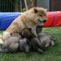 Die Arme Mama am 15.06.2014