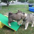 Spielen auf der Wippe am 17.06.2014