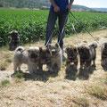 Gruppenbild unserer 7 Zwerge