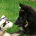 Bakira nimmt Kontakt auf zu einem Gefährten am 4.7.2012