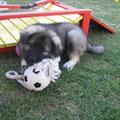 Cedric mit Ball am 26.06.2014