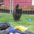 Billie geniesst den Garten am 30.3.2012
