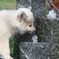 Amilou in Ihrem Garten am 12.09.2010