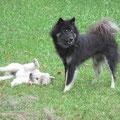 Akita und Dina