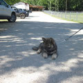 Spaziergang am 21.06.2014