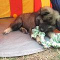 Conner mit Spielzeug im Zelt am 27.06.2014