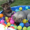 Cara und Champ vergnügen sich im Bällebad am 21.06.2014