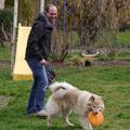 Akita mit Frisbee