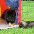 Caesar mit Tante Bakira-Anouk am 28.05.2014