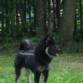 Betty beim Spaziergang am 30.7.2012