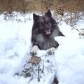 Außerdem hat die dicke Schneedecke viel für mich versteckt!