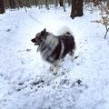 die Stille dieser herrlichen Winterlandschaft wird nur durch das Knistert meiner Pfoten unterbrochen und interessante Schneespuren gibt es so weit das Auge reicht.