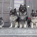 Wurfbruder Grolly, Mama, ich und Wurfschwester Ganja