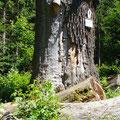 HWN 057 Hohle Eiche (ALT)