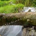 Wasserfall Bad Urach Nr.0455