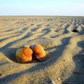Muscheln am Böhler Strand
