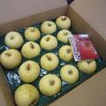 大船渡教会から弘前りんごを頂きました